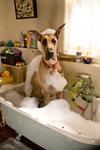 Marmaduke - pies na fali - galeria