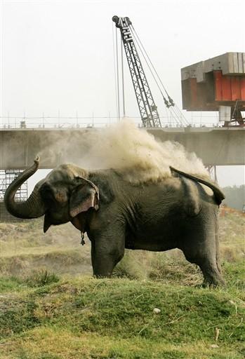 Słonie przegrały z Igrzyskami Dobrej Woli