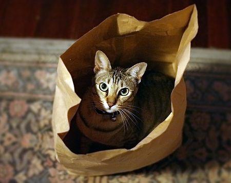 Kupić kota w worku