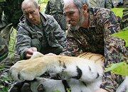 Putin usypia tygrysa