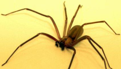 Uzdrowiony przez jadowitego paj�ka