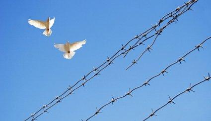 Uwaga! Gołębie roznoszą groźną chorobę