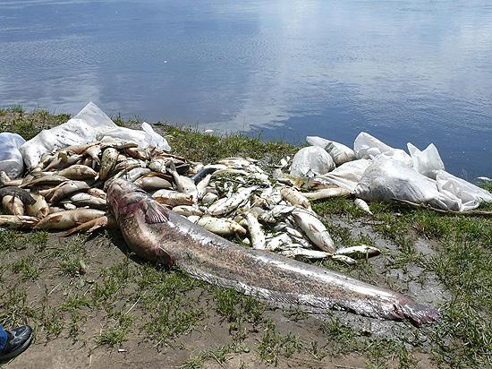 Wpływ zanieczyszczeń o właściwościach toksycznych na zwierzęta i rośliny