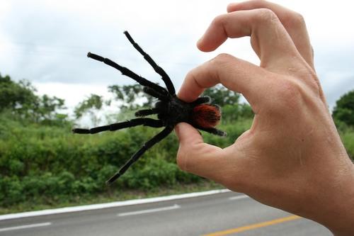 Czy paj�ka trzeba si� ba�?