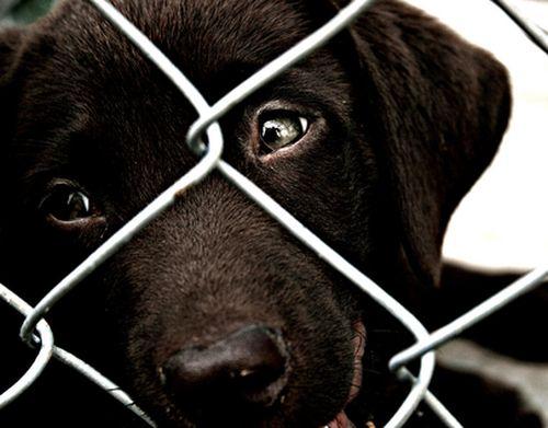 Prawa zwierząt