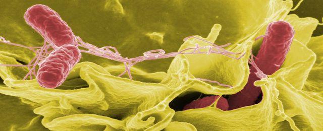 Atlas bakterii zamieszkuj�cych cia�o cz�owieka