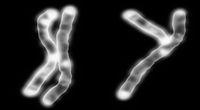 Kobieca strona męskiego DNA