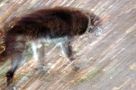 Właścicielka fundacji oskarżona o znęcanie się nad zwierzętami