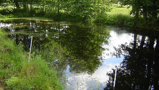 Tragedia we Wrocławiu: 16-latek utopił się w stawie