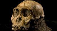 Zbadano czaszk� naszego odleg�ego przodka