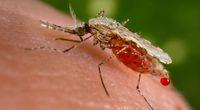 Sroga zima niegro�na komarom
