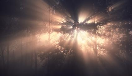 Najbardziej nawiedzone miejsca w Polsce: Las w Witkowicach
