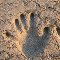 Zasypany piaskiem pla�owym z wykopanej przez siebie dziury