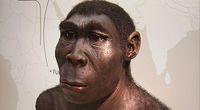 Jak Homo erectus dotarł do Polski?