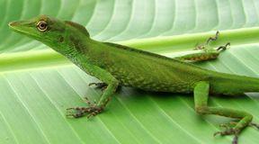 Amazonia: co 3 dni nowy gatunek