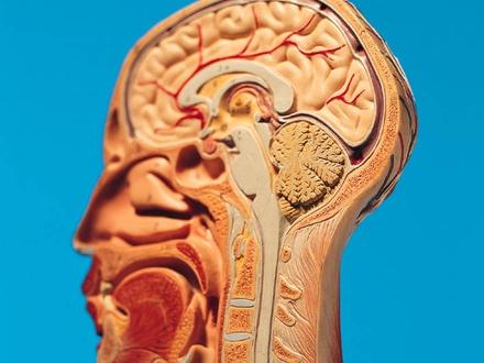 Hormony p�ciowe odm�adzaj� m�zg