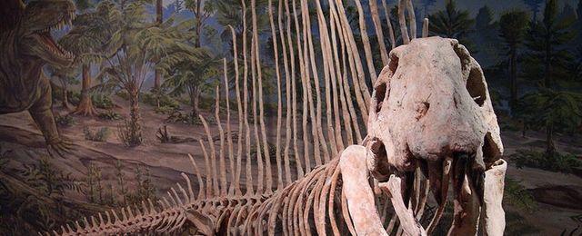 Odkryto ko�ci drapie�nika sprzed epoki dinozaur�w