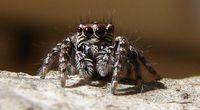 Sk�d si� bierze arachnofobia?