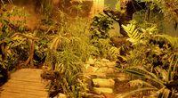 Tropikalny las w p�ockim zoo