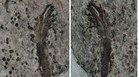 Tajemnicza skamielina w Chinach