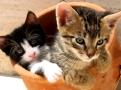 Koci-�apci kwiz