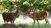 Antykoncepcja dla jeleni