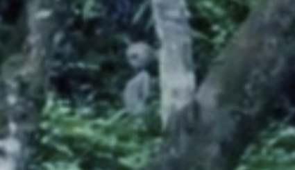 """Opublikowano zdjęcie kosmity z Amazonii. Eksperci: """"Te dowody trudno będzie zdyskredytować"""""""