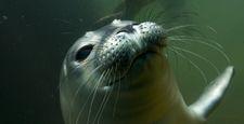 Ssaki morskie pod atakiem lądowych patogenów