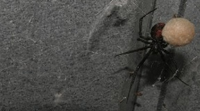 Inwazja śmiercionośnych pająków