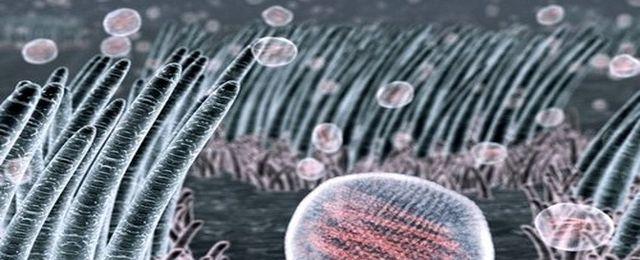 H7N7 pojawił się w Europie