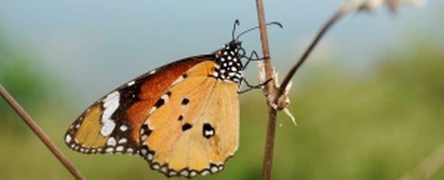 Efekt motyla - chaos rz�dzi naszym �yciem