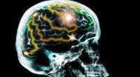Ludzki mózg ma granice. Mądrzejsi już nie ...