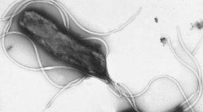 Mikroorganizmy, które powodują raka