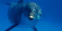 O czym �ni� delfiny?