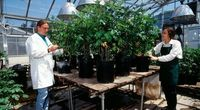 Polacy nie wiedzą, co oznacza termin GMO