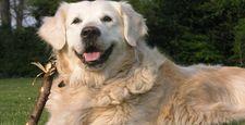 Pies w miejscu pracy to wi�ksze zaanga�owanie i mniej stresu