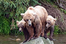Tragedia w parku. Niedźwiedzie rozszarpały dwie kobiety!