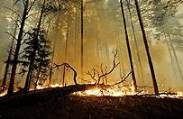 Ogromny po�ar w mazowieckim - sp�on�o 80 ha las�w