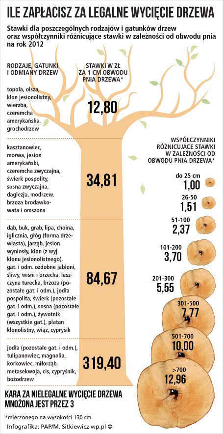 Ile kosztuje legalne wycięcie drzewa