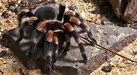 Arachnofobia jest uleczalna!