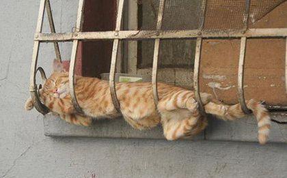 Zmęczone koty w dziwacznych pozach