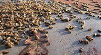 Roztocza zabijają pszczoły