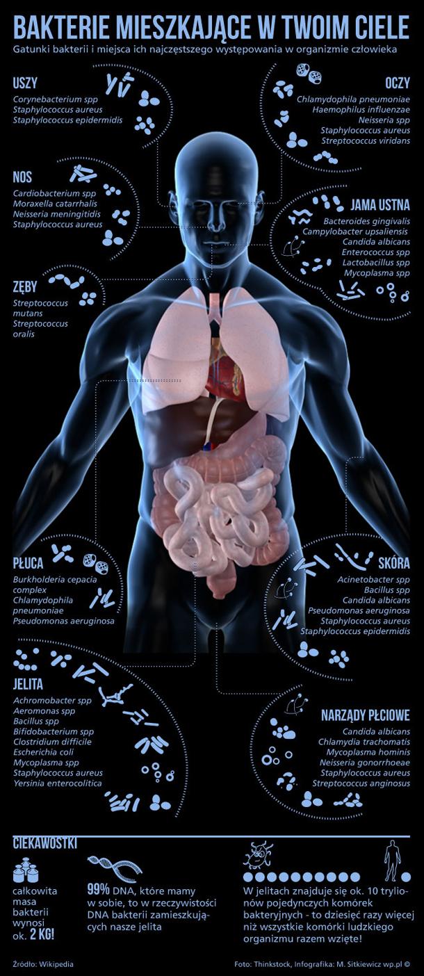 http://i.wp.pl/a/f/jpeg/29165/bakterie_infografika_610.jpeg