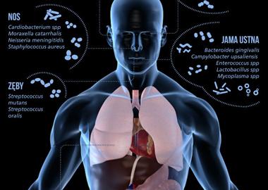 Jakie bakterie żyją w ludzkim ciele?