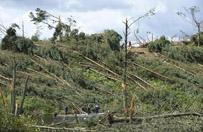 Trwa usuwanie powalonych drzew w Borach Tucholskich