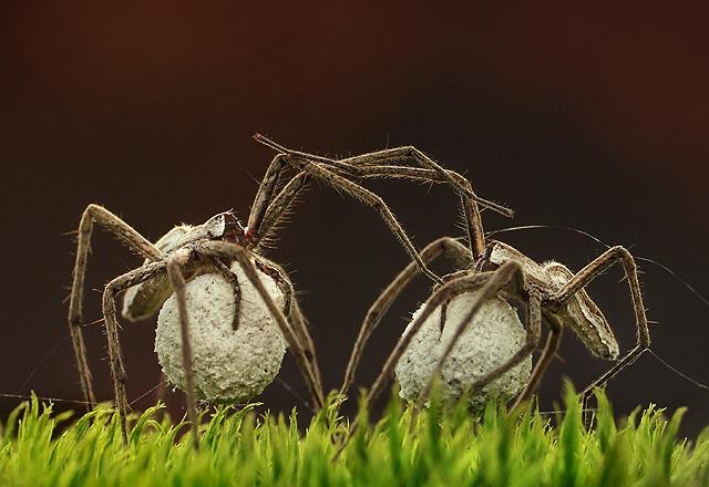 W sieci paj�ka