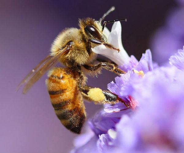 Greenpeace: pestycydy zagra�aj� pszczo�om i produkcji �ywno�ci