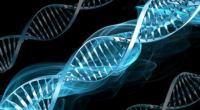 Przełom w badaniach nad ludzkim DNA