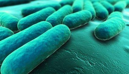 Rozmnażanie tych bakterii odbywa się mniej więcej co 120 lat (fot