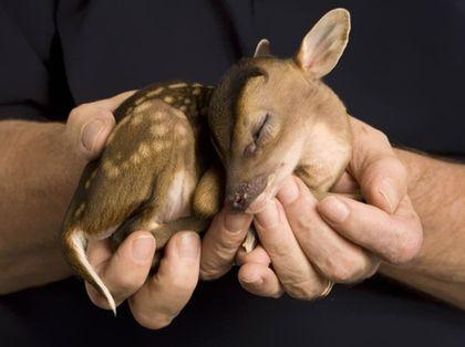 Znalezione obrazy dla zapytania najsłodsze małe zwierzaki